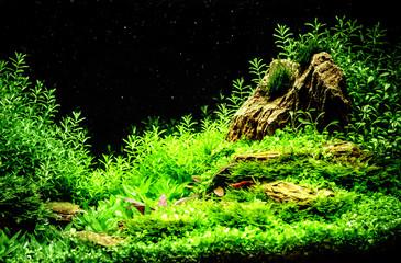 Green beautiful planted tropical freshwater aquarium