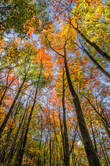 Autumn foliage, hardwood forest