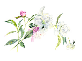 Peony. Decoration with blooming peony. Flower backdrop. Watercolor hand drawing illustration.