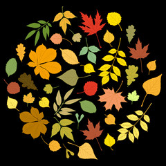 Round autumn design: multicolored leaves of various trees and rain drops. Linden, ash, oak, maple, chestnut, birch, elm, willow, aspen, rowan. Vector illustration on black background.