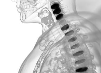 Human spine discs. 3d illustration