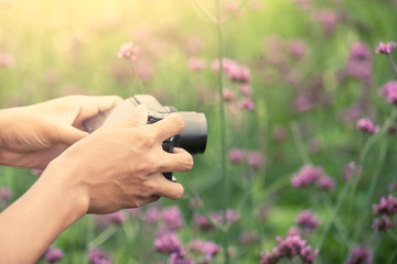 Man hand taking photo with compact camera in the flower garden