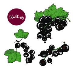 Blackberries vector set
