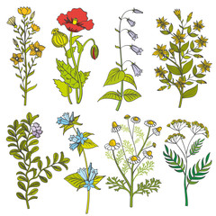 Herbs and wild flowers vintage vector color illustration. Summer flower set and spring colorful flower with leaf