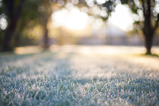 Frosted grass on a blurry bokeh sunrise backdrop