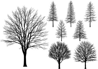 bare tree. Vector trees isolated on a white background.