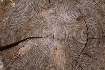 textura de tronco de madera de pino - Madera Rustica