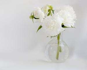 White peony in glass vase on white background