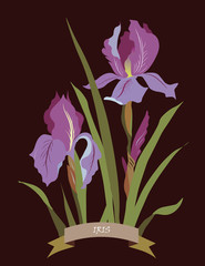 Iris flowers bouquet spring card on black background, place for text. Vector