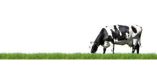 Aluminium Prints Cow Schwarz/Weiß gescheckte Kuh