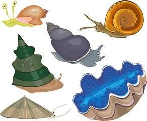 Set of sea snails
