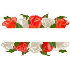 Red and white roses for congratulation