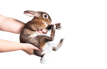 human hold rabbit with hand isolated on white
