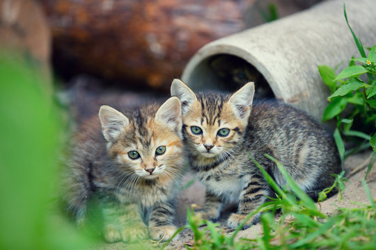 Two stray little kittens sitting near pipe in the yard