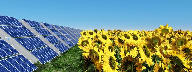Solarmodule und Sonnenblumen