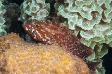 Unterwasser - Riff - Koralle - Fisch -Schwamm - Tauchen - Curacao - Karibik