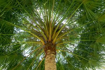 Under palm tree.