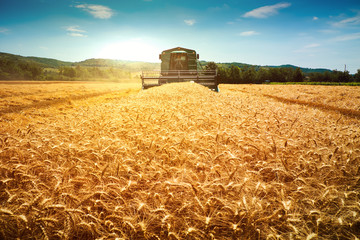Harvester machine to harvest wheat field working