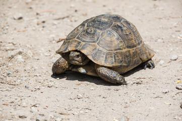 Tortoise on the path