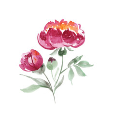 handmade paint drawn elegant decorative flowers. pink peony flow