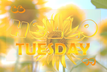 Hello Tuesday on sunflower background
