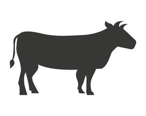 cow isolated icon design