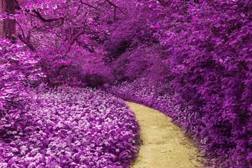Canvas Prints Violet Stunning infrared landscape image of forest with alternative col