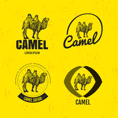 Vector colorful set with desert camel. The camel as main element of logotypes on yellow background. Engraves vector design graphic element, emblem, logo, sign, identity, logotype