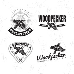 Vector black and white logo set with forest woodpecker bird. The woodpecker bird as main element of logotypes on white background. Engraves vector design graphic element, emblem, logo, sign