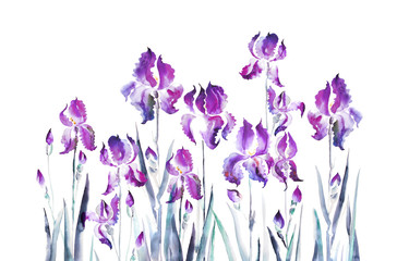 isolated  iris flower watercolor illustration