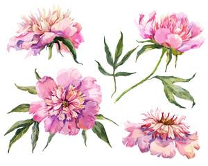Watercolor vector peonies