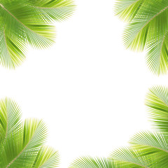 Coconut leaf frame isolated white background