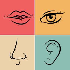 Quattro sensi, gusto, vista, olfatto e udito