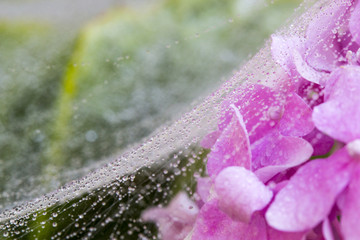 spider web with drop of water on flowers and leafs. Abstract