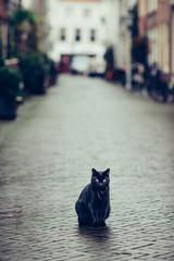 Black cat in a beatifull dutch street