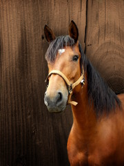 Brown horse with wooden background