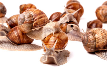 some snails crawling on a white background closeup