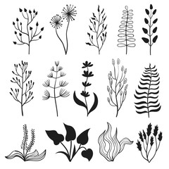 Vector floral set. Collection of branches, leaves, herbs and flowers. Black plant silhouettes isolated on white.