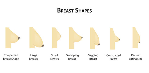 Shape the breast. Vector illustration on isolated background