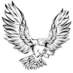 Monochrome Eagle During Landing