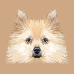 Spitz Dog animal low poly design. Triangle vector illustration.