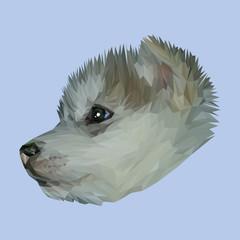 Siberian Husky Dog animal low poly design. Triangle vector illustration.