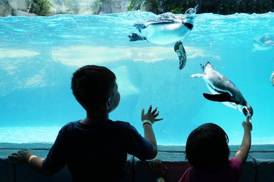 Children enjoying watching penguin