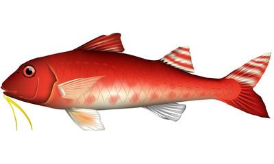 ヒメジ 魚 イラスト ベクター
