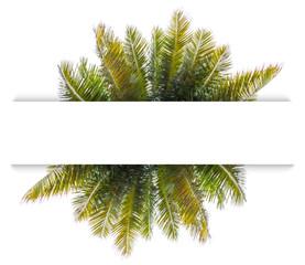 feuilles de cocotier sous bandeau blanc