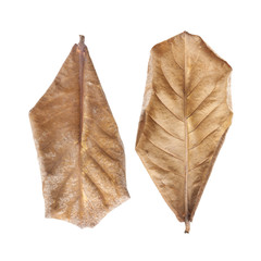 dry leaves Isolated with clipping path