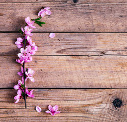 Peach blossom on old wooden background. Fruit flowers.