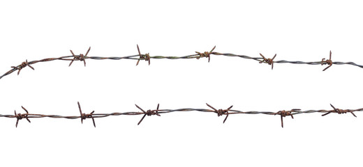 International migrants day concept: Rusty barbed wire isolated on white background.
