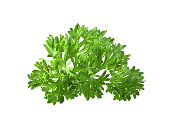 Green leaves of parsley isolated on white background
