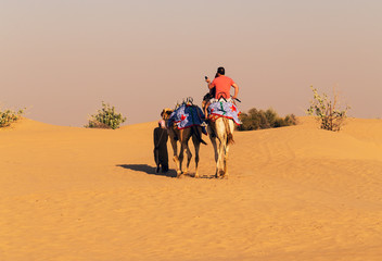 camel safari dunes